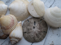 Collection of shells we found at Bowman's Beach.