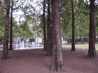 Cypress grove at Heritage Square.