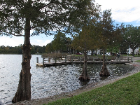 Cypress trees in Florida always look so gorgeous!