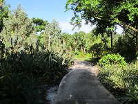Walkway through the lush garden.