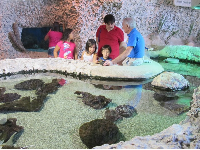 A volunteer tells a family about marinelife in Florida.