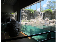 Otters play in this lovely enclosure that is outdoors but seen from inside.