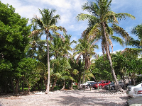 The parking lot is in a grove of coconut trees.