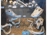 Skulls in the nature center.