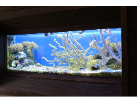 Marinelife tank in the nature center.