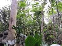 Lush jungle on the Pangani Forest Trail.