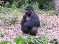 The gorillas were interesting to watch as they faught and vied for power.