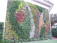 Amazing vertical garden, at Saks Fifth Avenue.