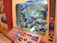 Reef exhibit.