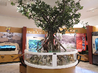 Mangrove exhibit.