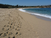 Take a long stroll along the perfect sands of Carmel River State Beach!