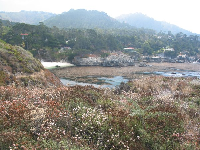 Flowers, kelp beds, Gibson's Beach, and then the pine-covered mountains.