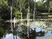 The funny, delightful longfellows by Frabel catching the morning light over a lily pond.