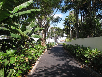 The lush landscaping along the path.