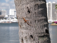 Gecko on a palm trunk.
