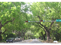 The archway of trees on the drive through Coral Gables to Fairchild Gardens.
