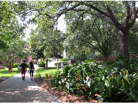 Students strolling along a shady path.