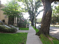 A giant oak tree cracking through the sidewalk.