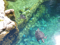 Turtle swimming by.