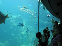 Visitors enjoy the tropical tank before they enter Turtle Trek.
