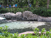 It's wonderful to stand in the shade above Dolphin Cove and take in the scene.