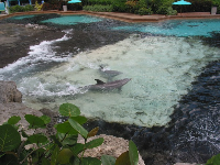 Dolphins playing in the waves at Dolphin Cove.