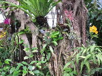 Orchids in the tropical rainforest.