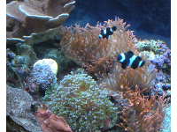 Fish and coral.