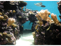 Tunnel of coral and white fish with black stripes.