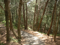 Forest walkway.