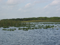The Everglades are so open and expansive!