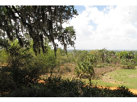 Bok Tower Gardens are slightly raised up above the surrounding countryside.