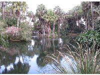 The lake and tropical foliage.