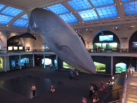The impressive Hall of Ocean Life.