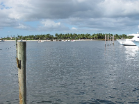 View of the island from Sailfish Marina.