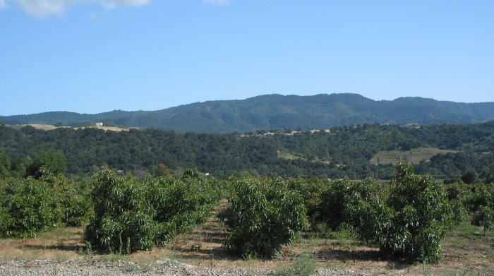 Drive through the Orange Groves, Ojai, Ventura California