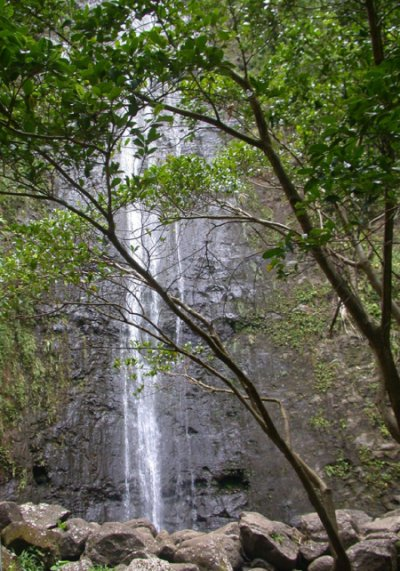 Manoa Falls Hike, Oahu Hawaii
