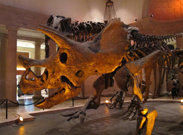 Natural History Museum, Los Angeles, Los Angeles California